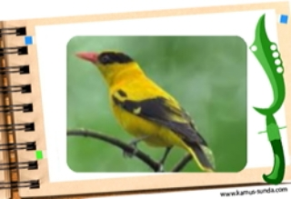 Burung pencipta lagu