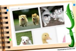 Mengenal sebutan binatang dan anaknya