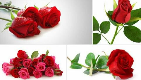 Mengenal nama bunga dalam bahasa sunda